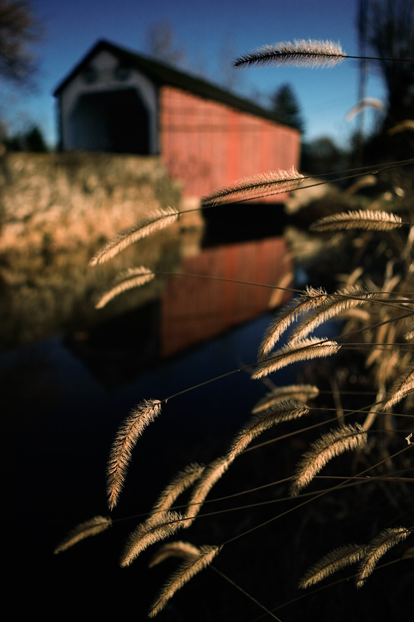 Foxtails at the Erwinna Covered Bridge