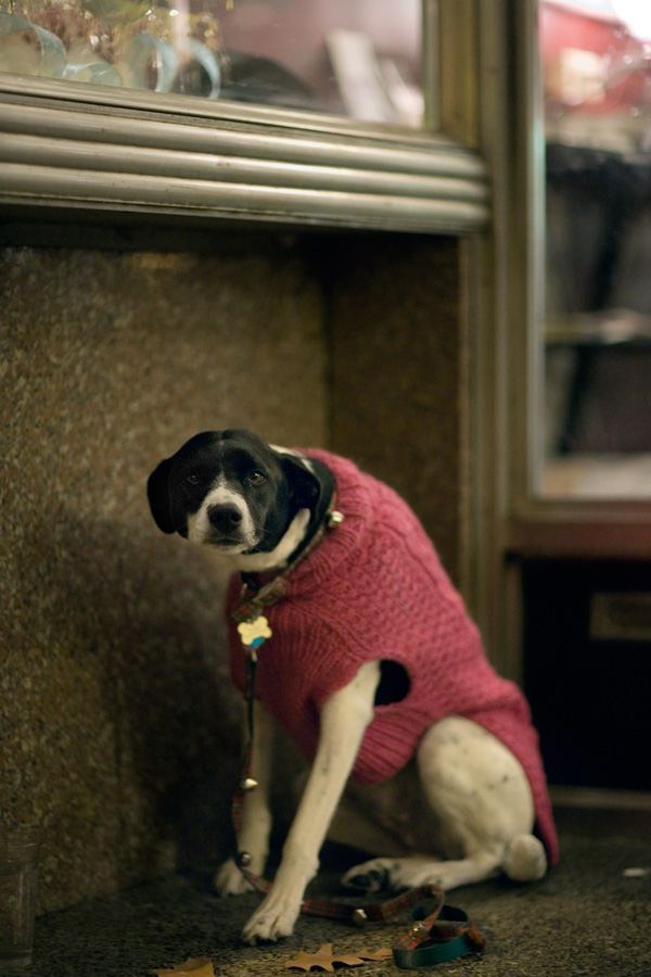 Dog in Shop Doorway, Bethlehem, PA
