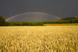 Wheat Field & Rainbow