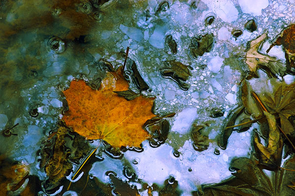 Oily Water & Leaf