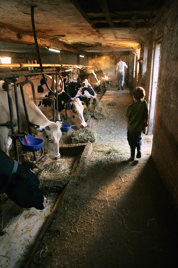 The Milking Hour