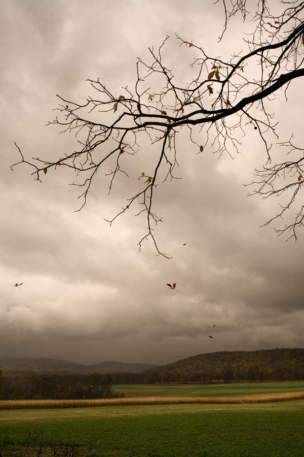 Falling Leaves, Afternoon Storm
