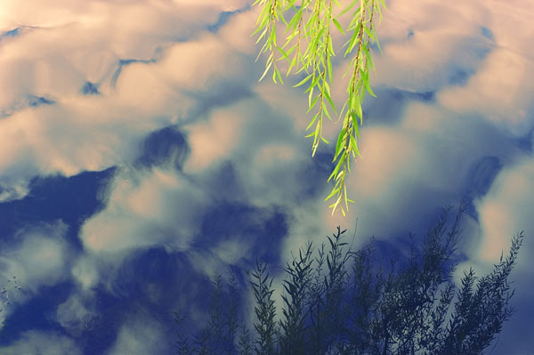 Willow & Clouds